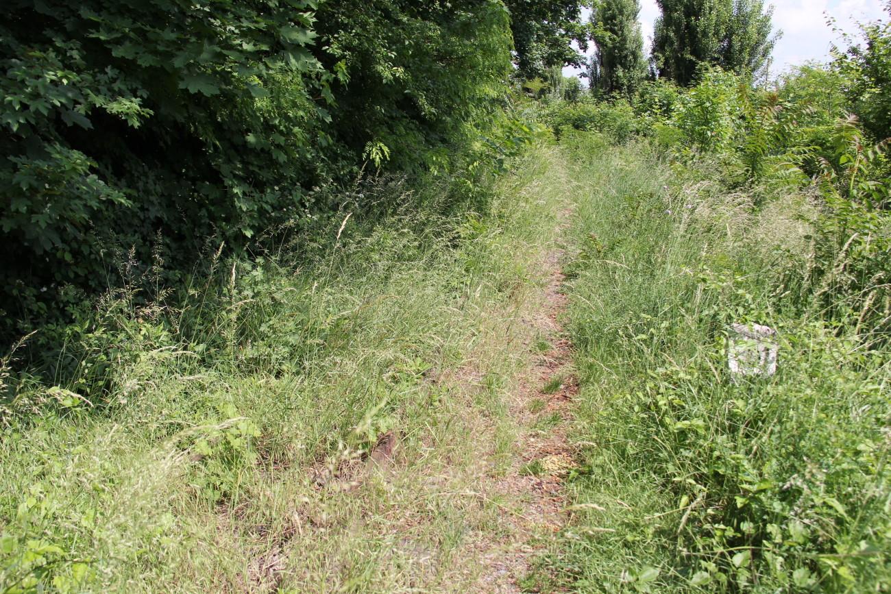 у траві можна знайти колії та пікетні стовпчики Some rail and kilometer column can be found in the grass