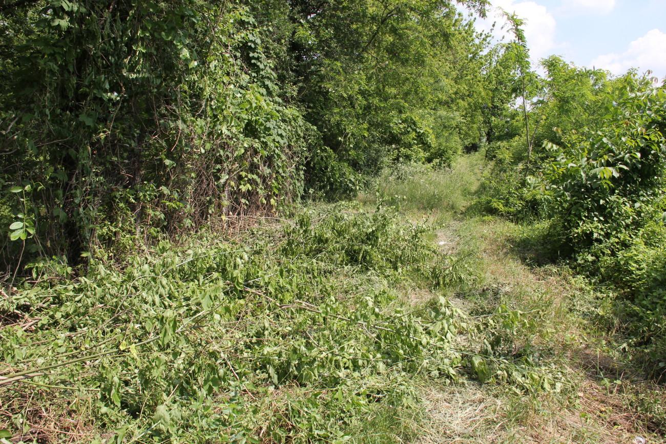 хтось боровся з рослинністю на колії Someone tried to clean rail from shrub.